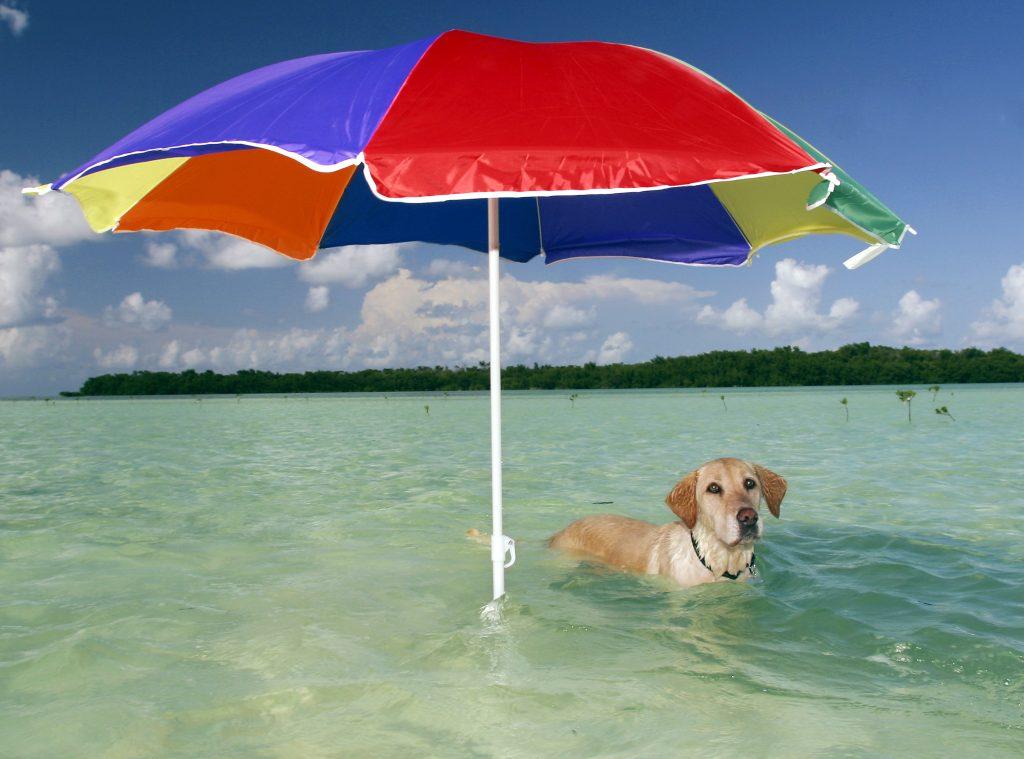 Key West Public Beaches – Dog Beach